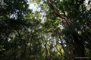 Tropical Hardwood Hammock