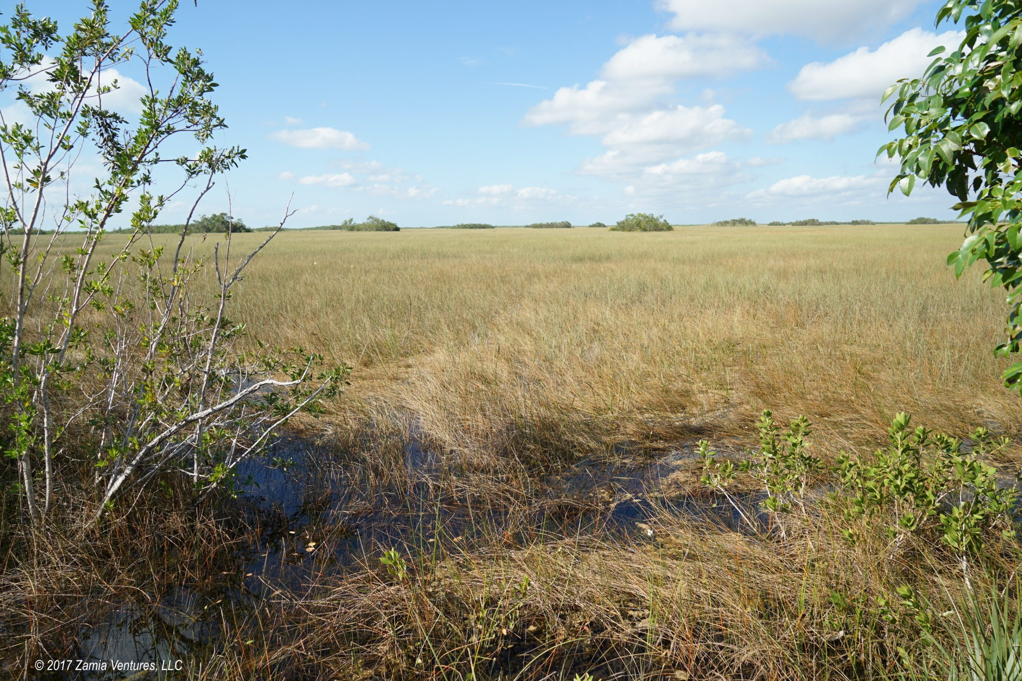 Seeing Renewal in Destruction at Everglades NP