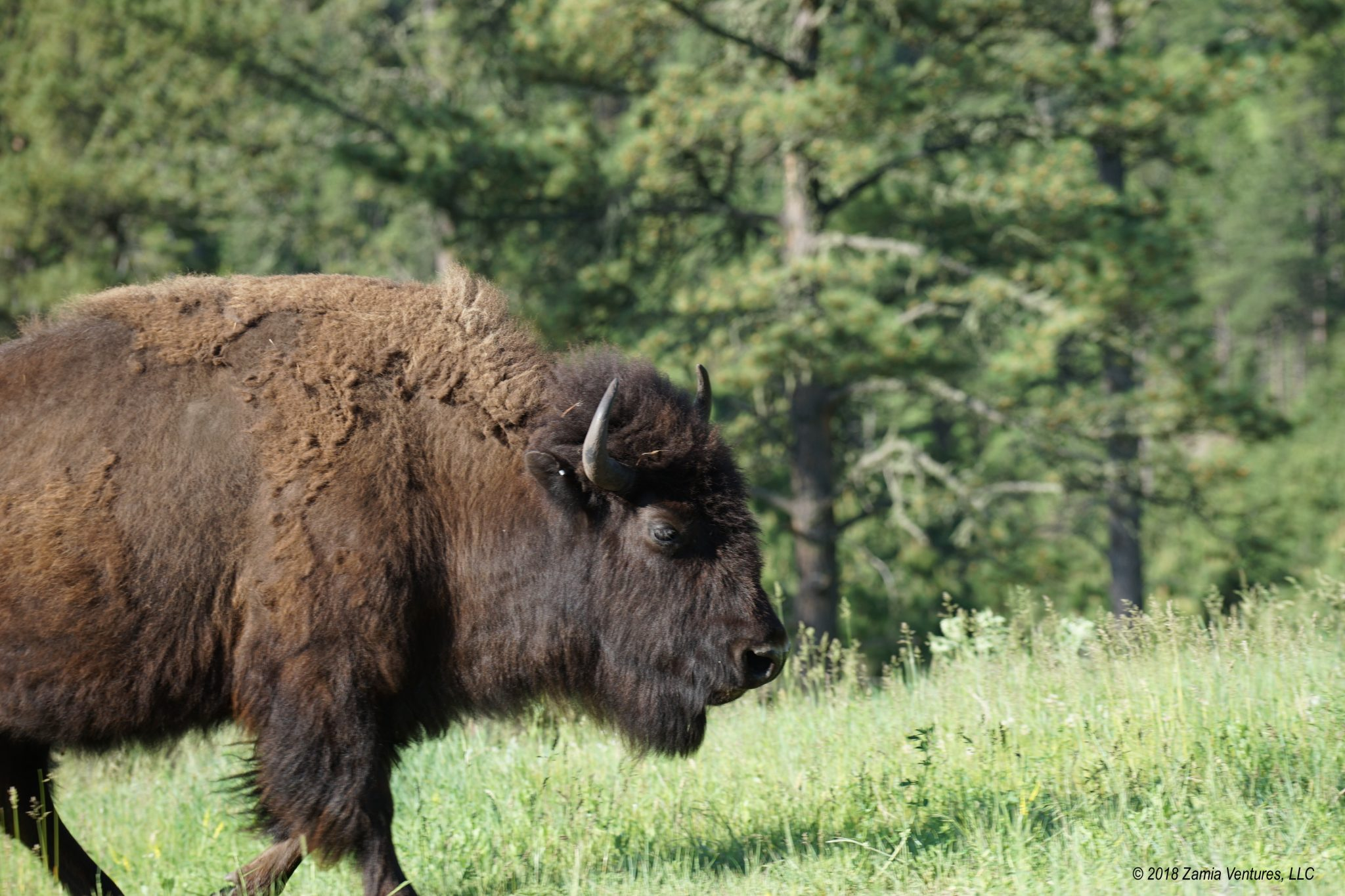 Finding the Wild in the Black Hills