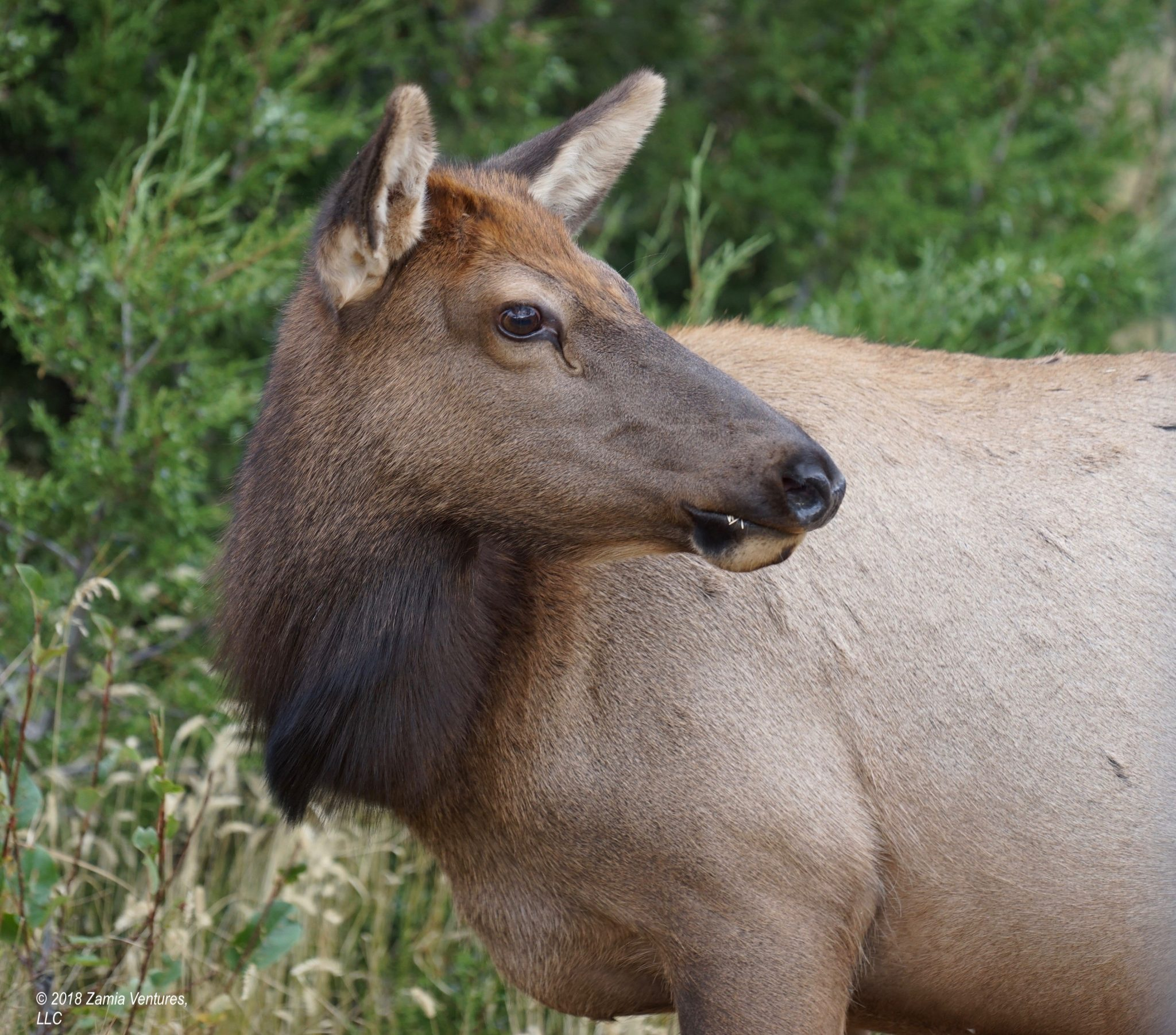 Yellowstone Part 2: Prolific Wildlife and Scenery in Northern Yellowstone